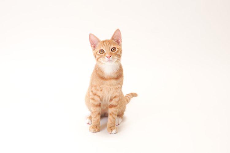 犬に猫用の歯磨き粉は使えない?