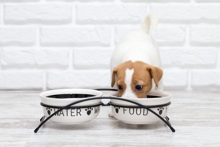犬に「豆腐」を与える際の適量は?(小型犬・中型犬・大型犬)