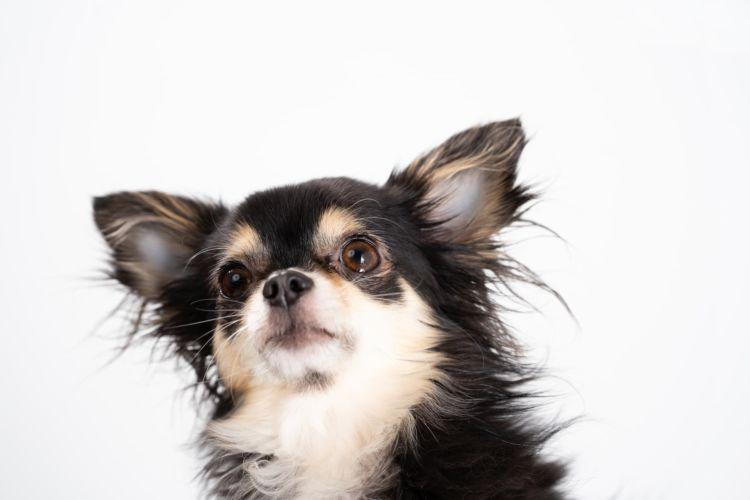 犬の歯並び【歯並びが悪い場合に注意すべき病気と予防対策は?】