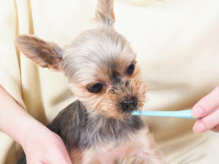 犬の歯並び【歯並びが悪い場合の食事や歯磨きの仕方、注意点、ポイントは?】