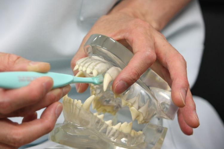 歯磨き①【口の開け方は?】