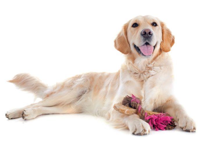 ガムや骨、ボールなどを飲み込む誤飲の事故は、1歳以下の若い犬に多く起きています
