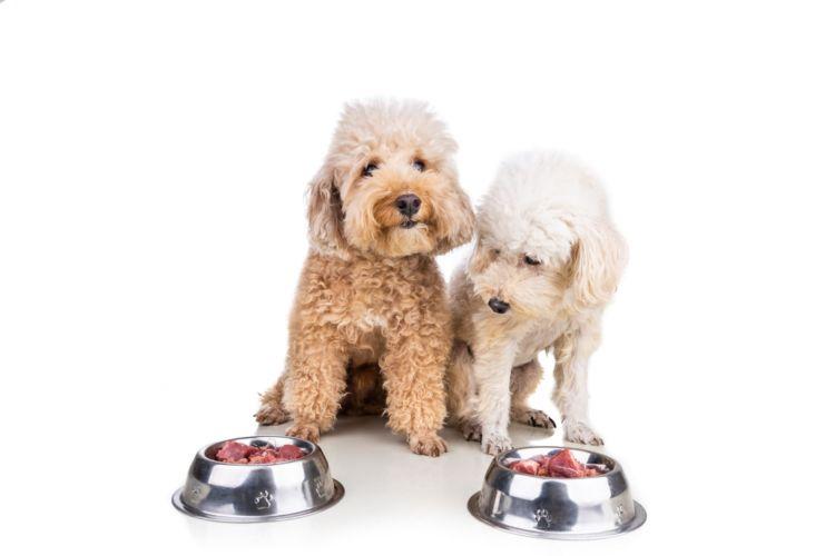 食中毒や感染を疑う症状が出た場合は、すぐに動物病院を受診しましょう。