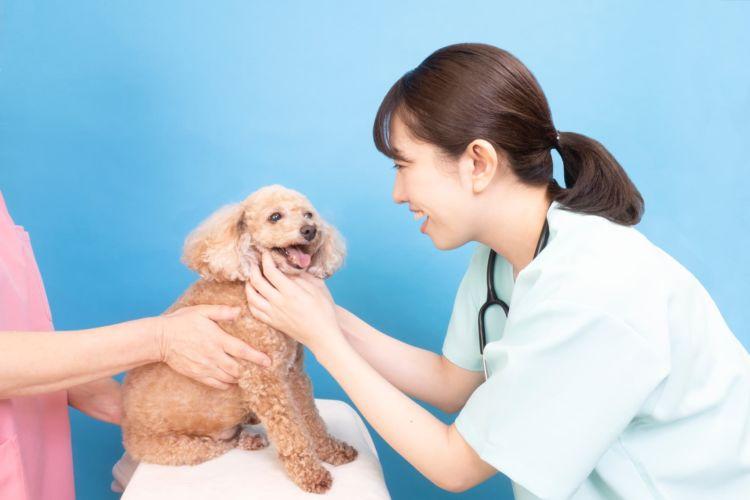 トイ・プードルの歯磨き【歯周病など、気をつけるべき歯の病気は?】