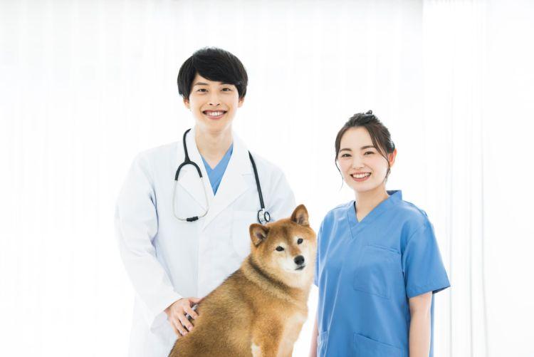 犬の歯科治療【ペット保険は適用される?】