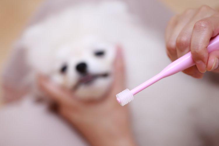 歯磨き②【おすすめグッズは?】