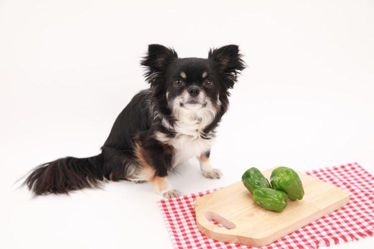 犬にピーマンを与える際の【適量】は?(小型犬・中型犬・大型犬)