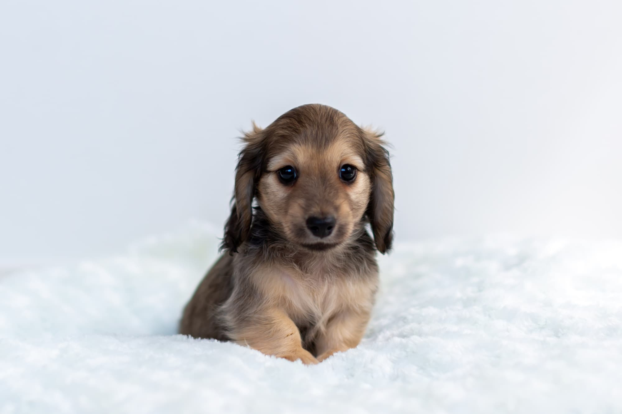 子犬の健康診断、しなくても大丈夫?健康診断はいつから必要?