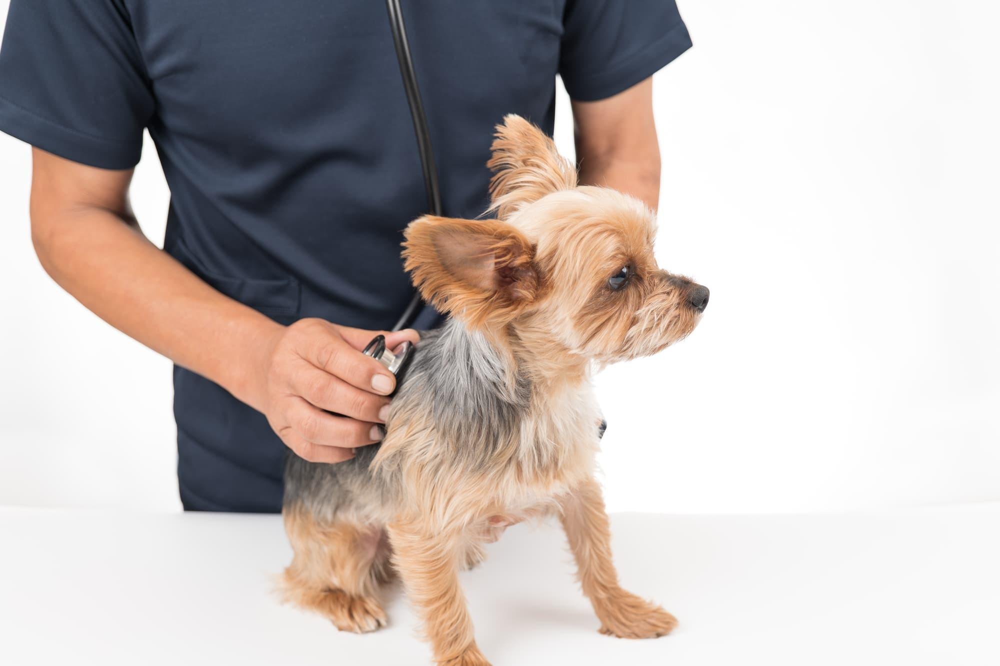 犬の定期検診は何歳から行うべき?頻度は?