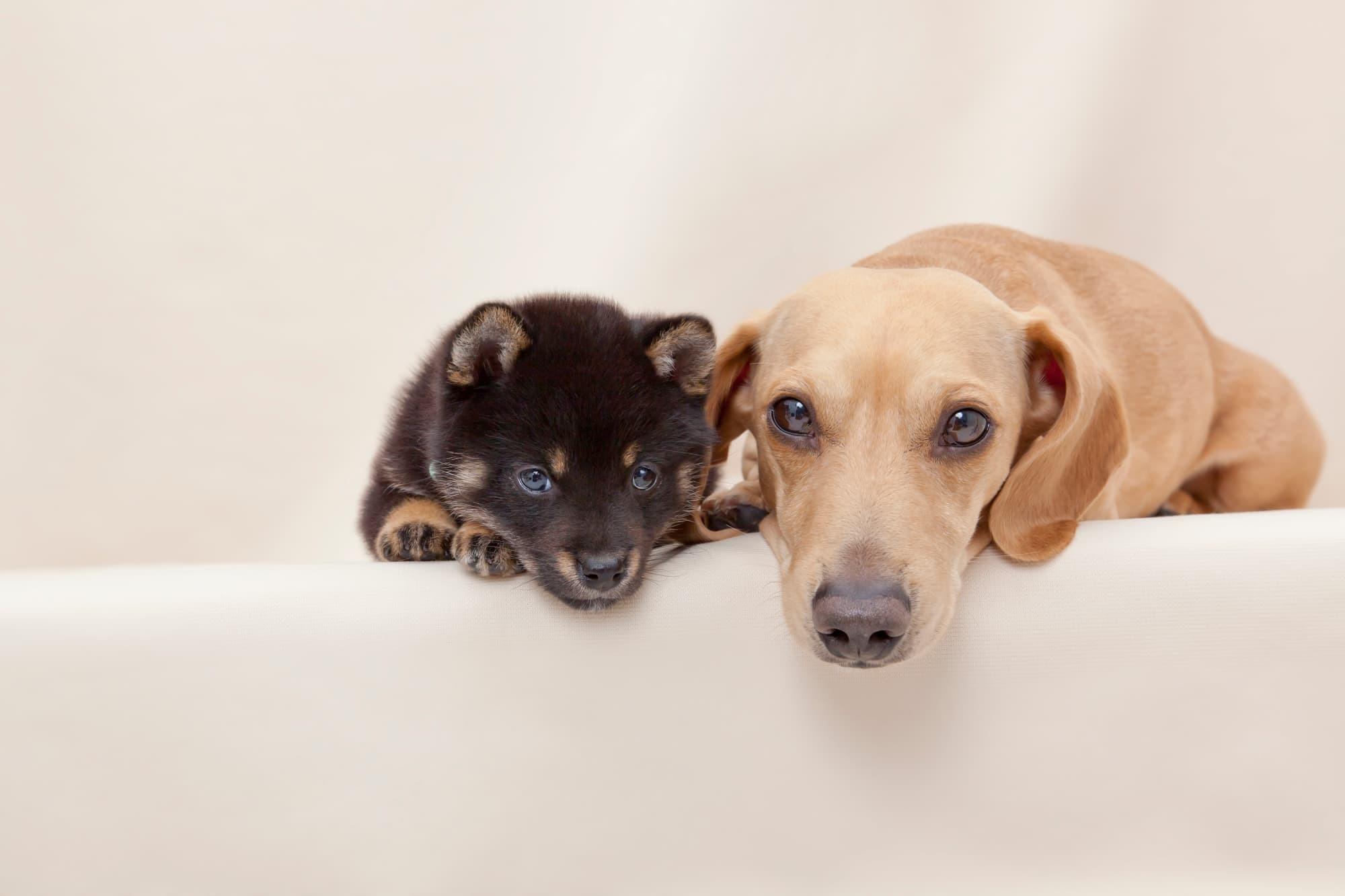 子犬の健康診断の費用に、保険は適用される?