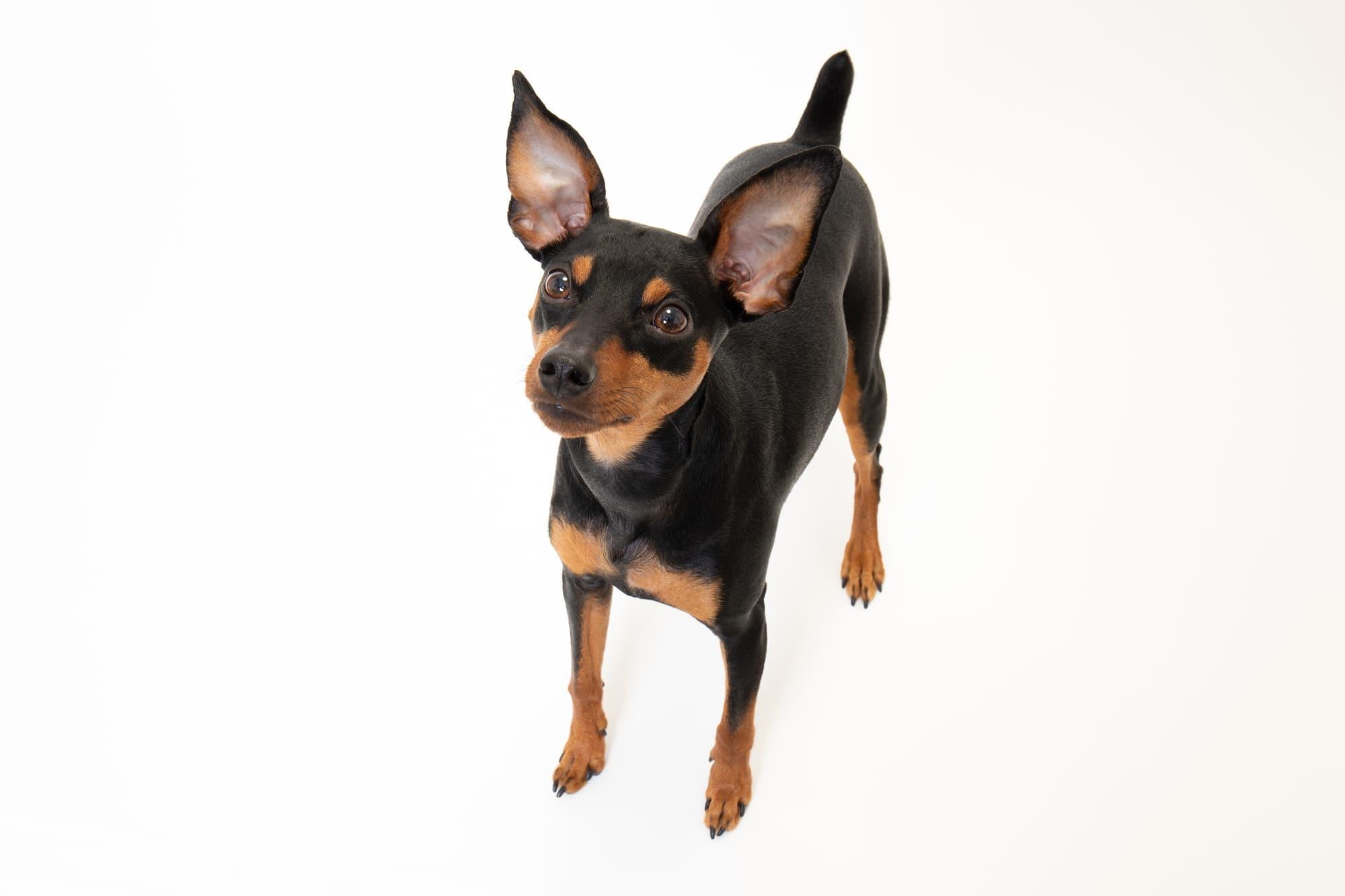 子犬の健康診断、注意点やポイント!