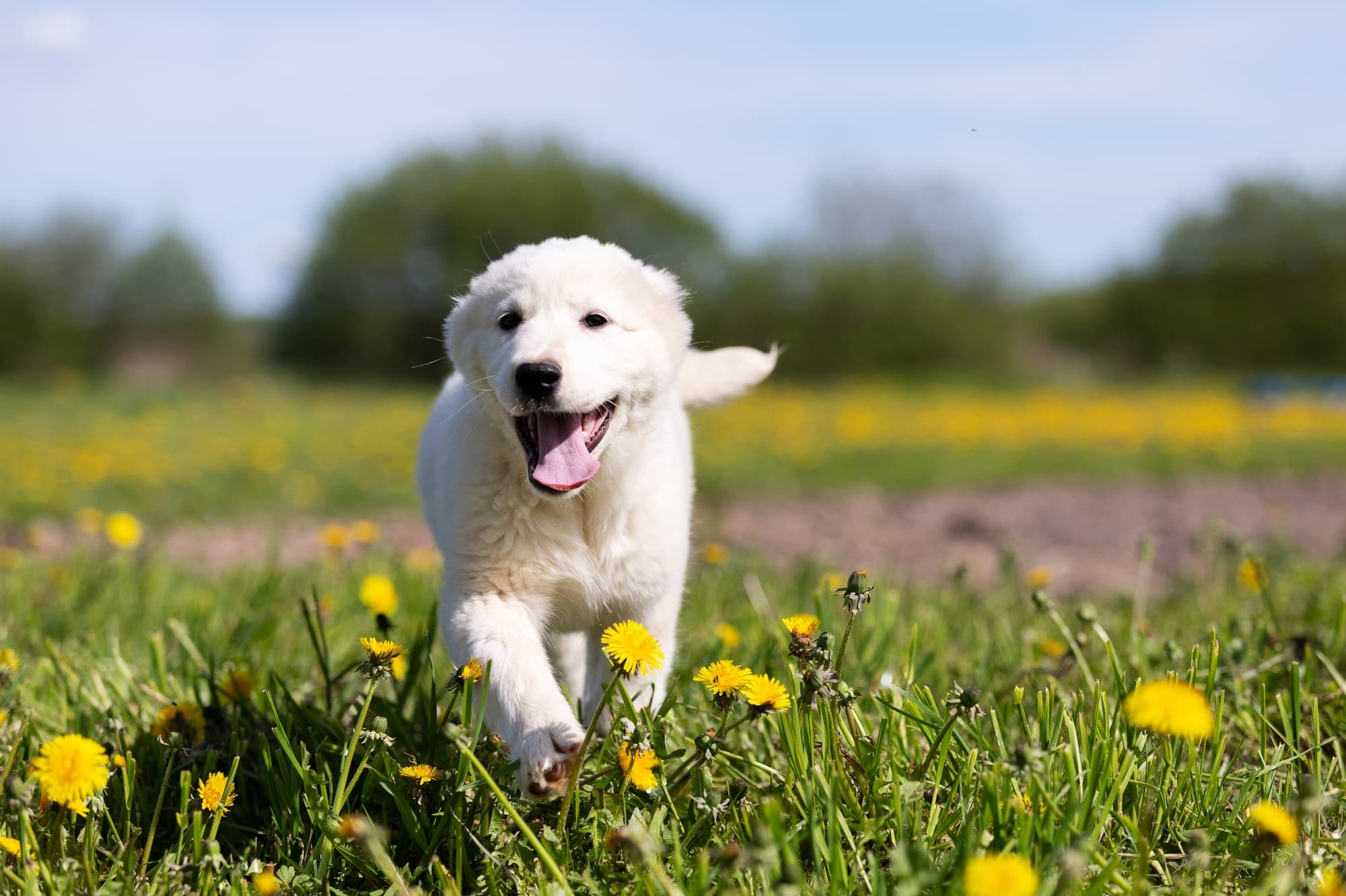 子犬の健康診断のまとめ