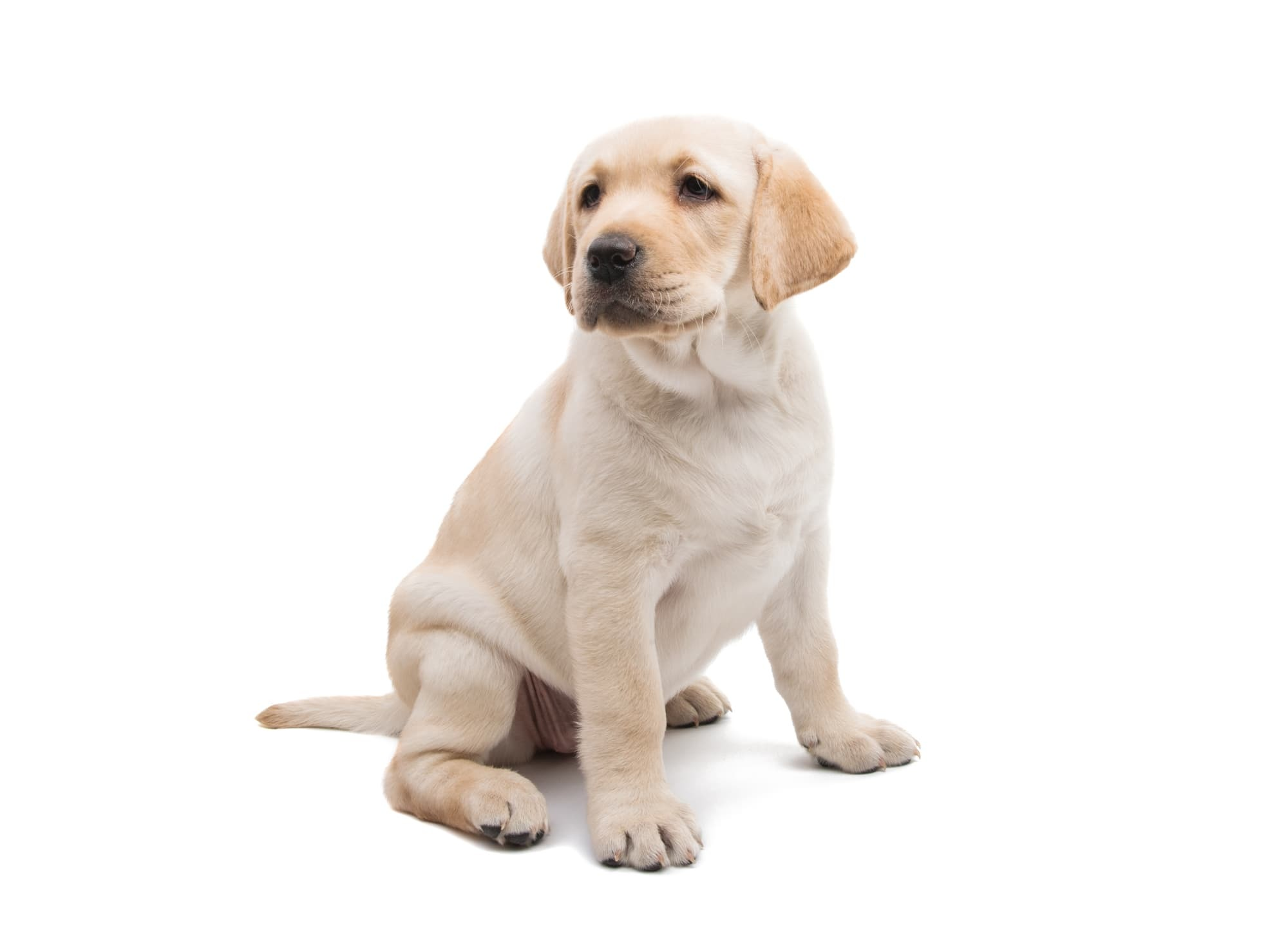 子犬(赤ちゃん)・老犬(シニア犬)の歯科検診は必要?