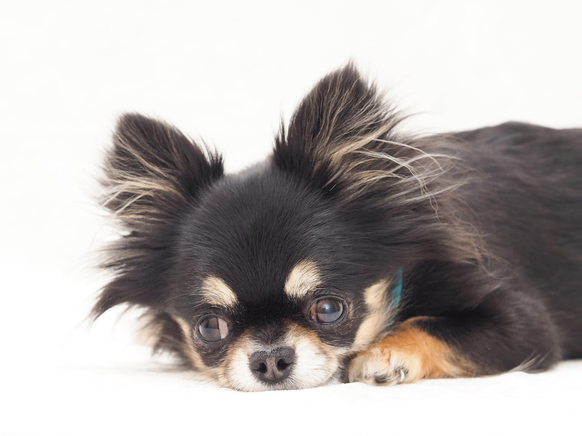 犬の歯科検診【メリット】