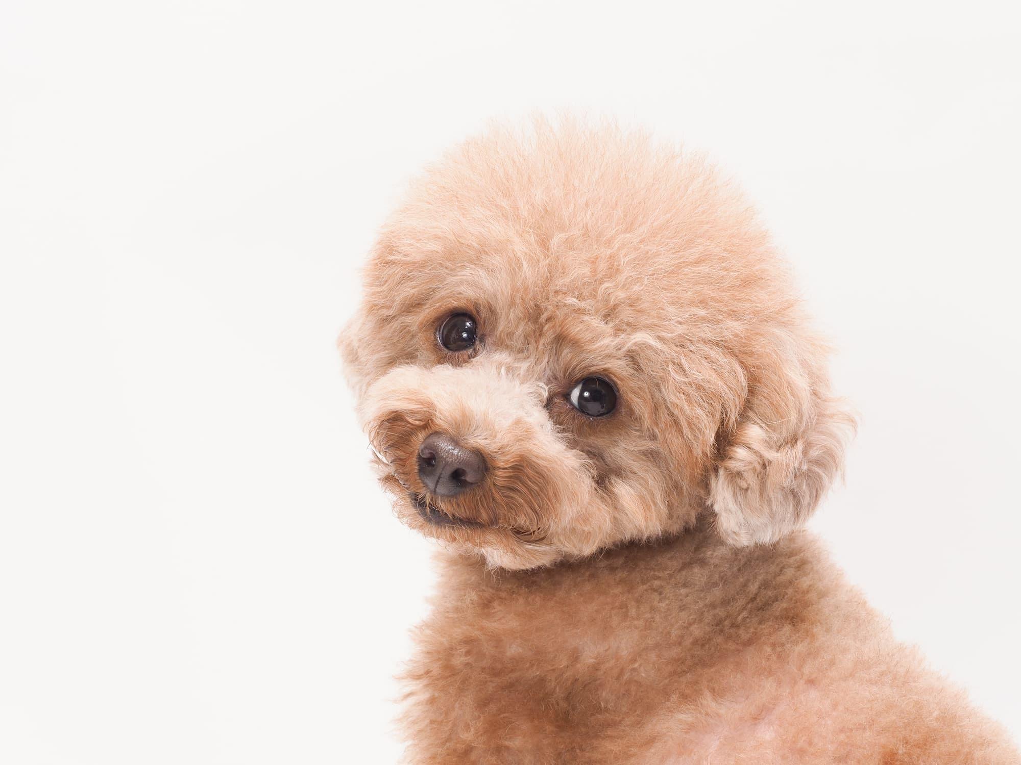 犬の歯の検査にかかる費用や料金(値段)はどれくらい?