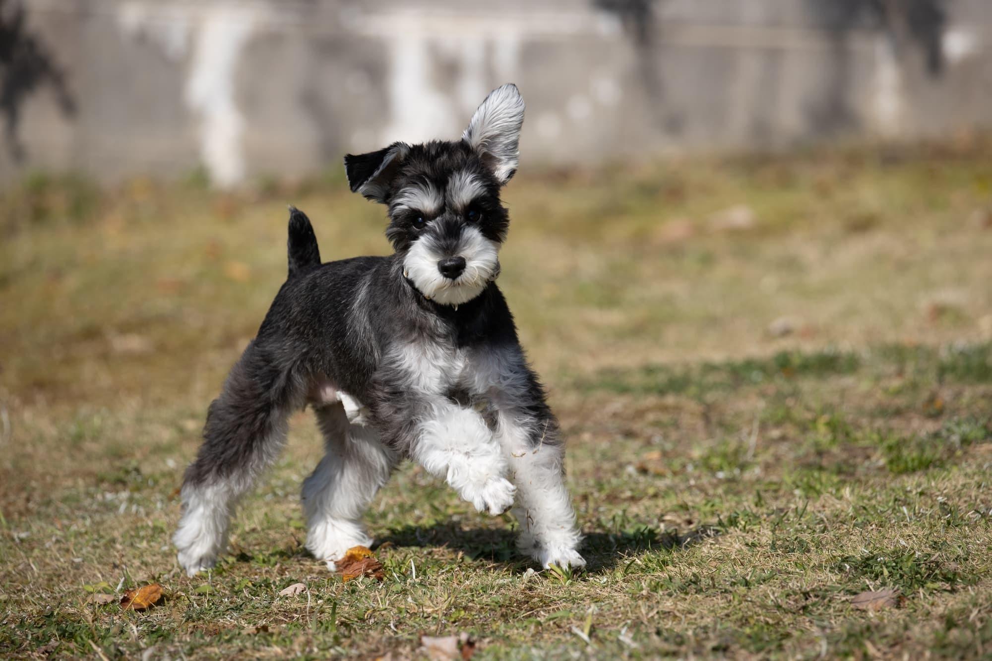 犬の歯科検診にペット保険は適用される?