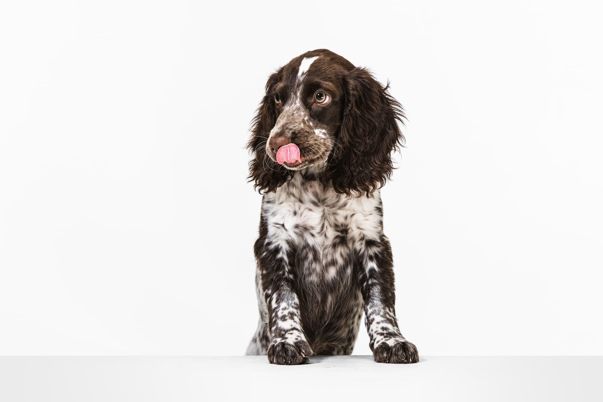 犬の歯のクリーニングやホワイトニングは必要?