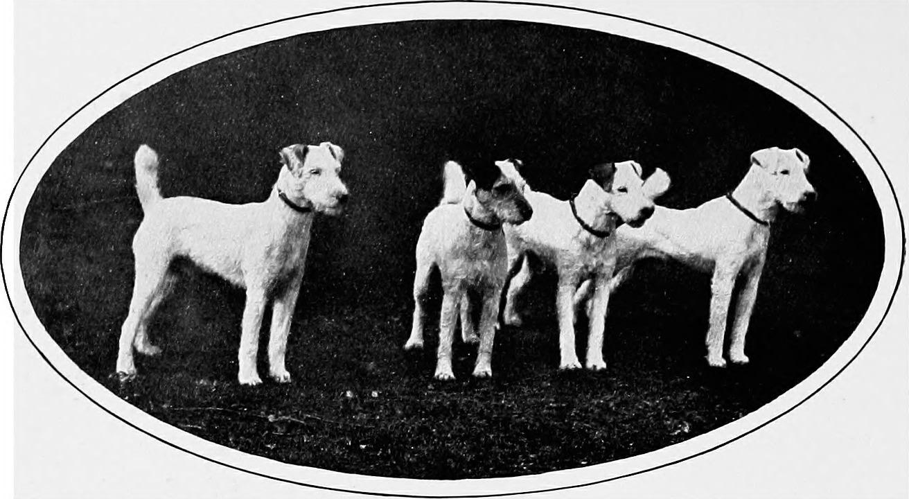 1907年以前に撮影されたと思われる4頭のワイヤー・フォックス・テリア