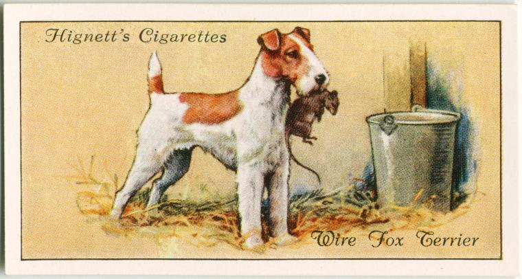 1800年代後半~1900年代前半にかけてタバコの箱の中にトレーディングカードを入れるのが流行した時代があり、その中には犬シリーズもあった。このカードはワイヤー・フォックス・テリアの仕事ぶりをよく表している