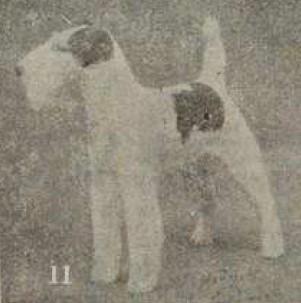 昭和初頭、日本で飼育されていたワイヤー・フォックス・テリア