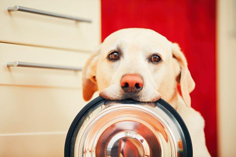 【獣医師監修】犬がパプリカ(生)を食べても大丈夫?与える量や「種」「へた」に注意!