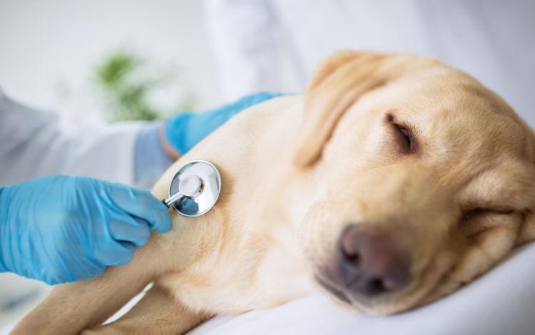 犬に「ぶどう」を与えた際の致死量は?(小型犬・中型犬・大型犬)