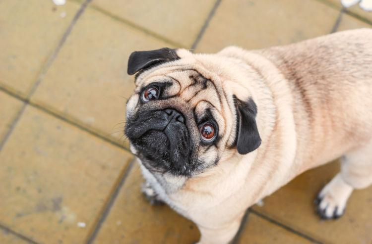 犬に「生」のたけのこを与える際の注意点!