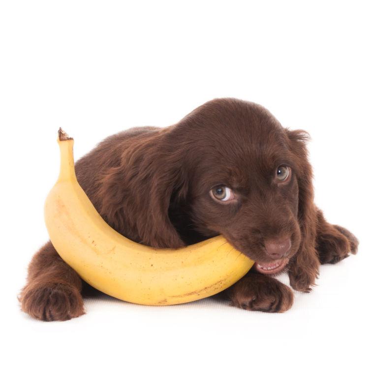 愛犬に与える「バナナ」まとめ