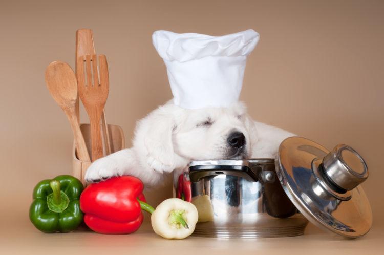 【獣医師監修】犬がピーマンを食べても大丈夫?生や種、肉詰めは?口臭効果がある?適量や注意点も!