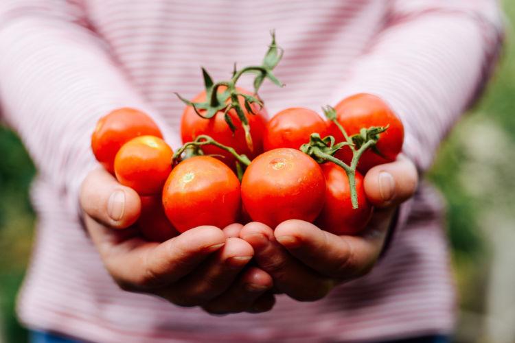 トマトが持つ抗酸化作用