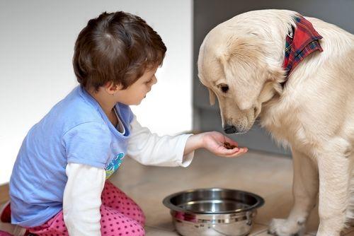 子犬や老犬に「枝豆」を与えても大丈夫?