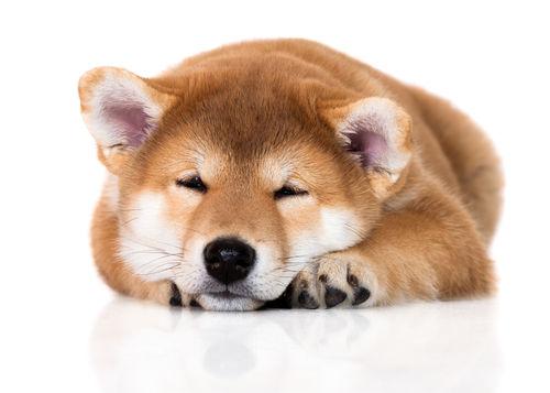 犬に「ぶどう」の皮や果汁を与えるのも危険?