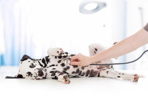 犬が食べると危険な「ぶどう」の種類