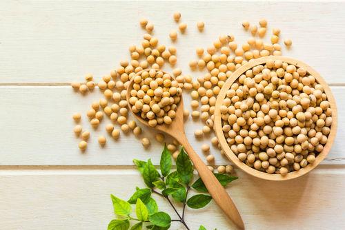 大豆に含まれる栄養素⑤【脂質】