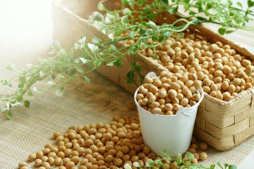 大豆に含まれる栄養素⑦【マグネシウム】
