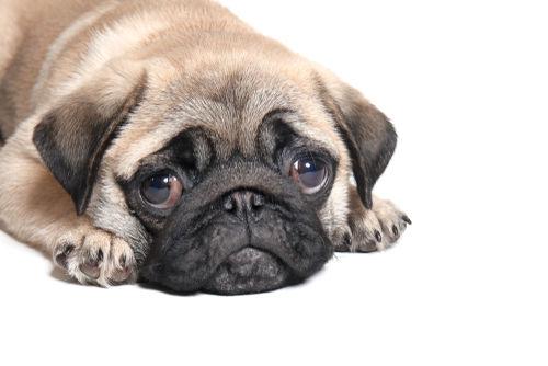 犬が「ホースラディッシュ(西洋わさび)」も食べてはダメ?