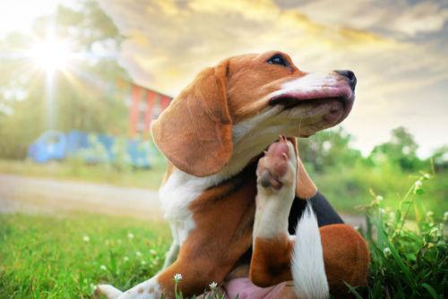 愛犬にメロンを与えた場合、アレルギーは大丈夫?