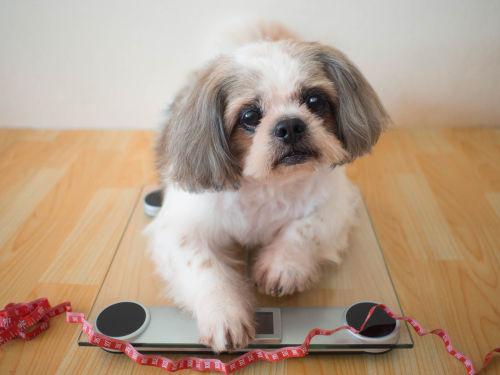 犬にくるみを与える際の【適量】は?(小型犬・中型犬・大型犬)