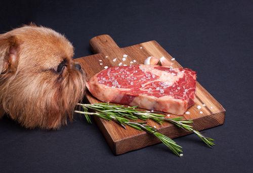 【獣医師監修】犬が牛肉(生の牛肉)を食べても大丈夫?メリットや注意点(アレルギー)など