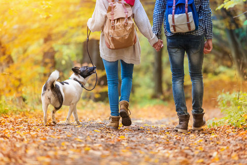 愛犬がどんぐりを食べた際は、カビや除草剤にも注意しましょう!