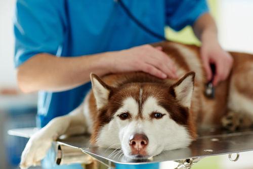 犬のネギの誤食【治療法・治療費】は?