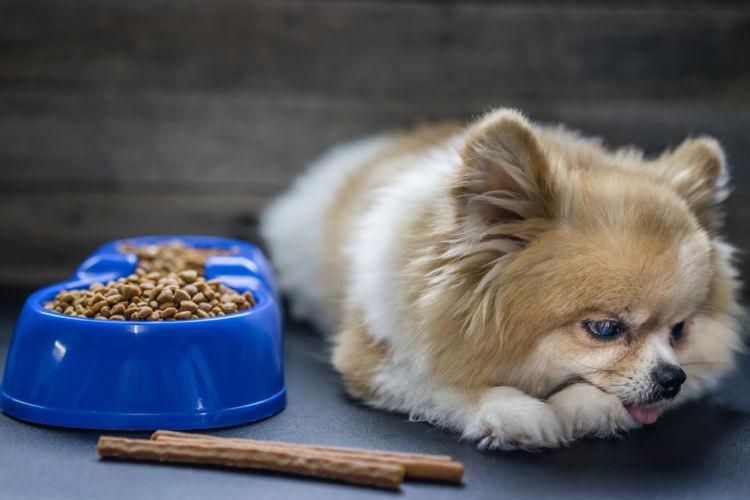 犬の食欲不振、犬が食べない【考えられる原因】