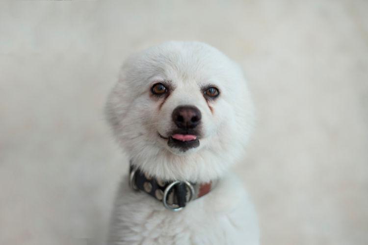 犬の目が涙焼け(涙やけ)になっている【こんな場合は要注意!】