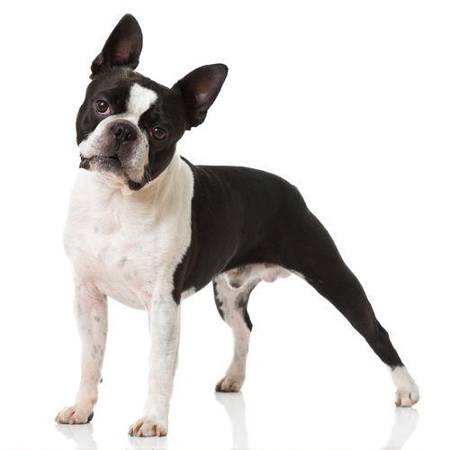 中型犬(11~20㎏)