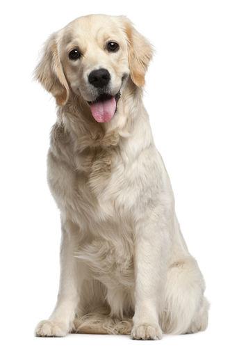 大型犬(21~40㎏)