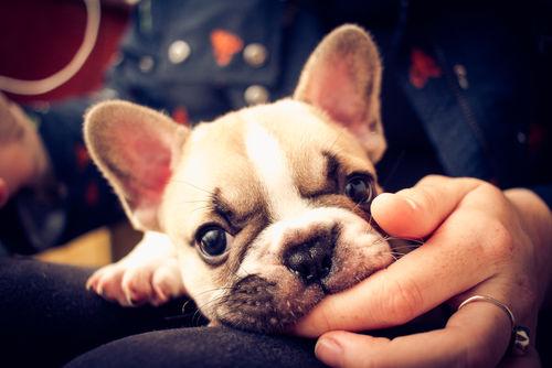 犬が口をくちゃくちゃ【注意すべき犬種は?】