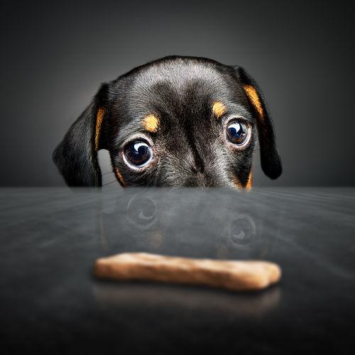 犬のおやつの「丸呑み」に要注意!