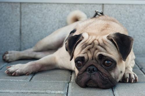 犬の足が震える・痙攣する【こんな場合は要注意!】