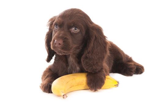 食べて大丈夫な果物⑤「バナナ」