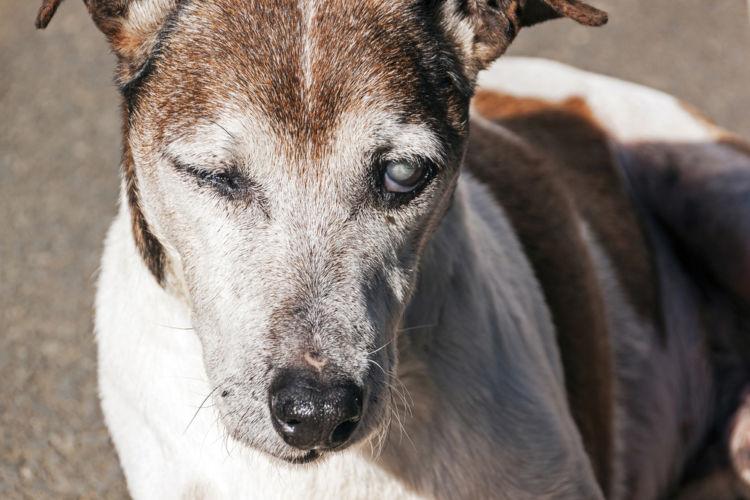 犬の目が見えない【こんな症状は要注意!】